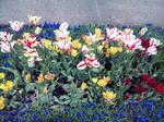 花回廊 チューリップ3
