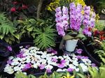 花回廊 温室 ラン