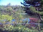 播磨中央公園・四季の庭(池)