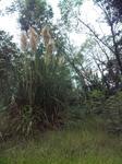 播磨中央公園の謎の植物