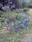 四季の庭に咲いた花