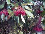播磨中央公園の木の実