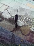 湯村温泉にいた鳥