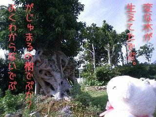 yakusima2.jpg