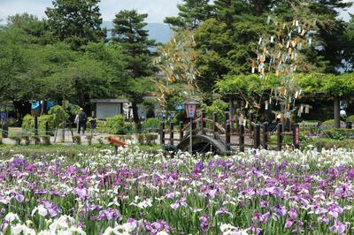 長井あやめ公園|つれづれShoto