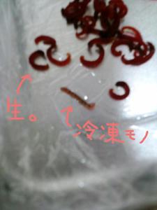 CA3G0165.jpg