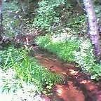 画像:玉原湿原