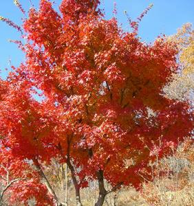 画像:城峯公園 紅葉