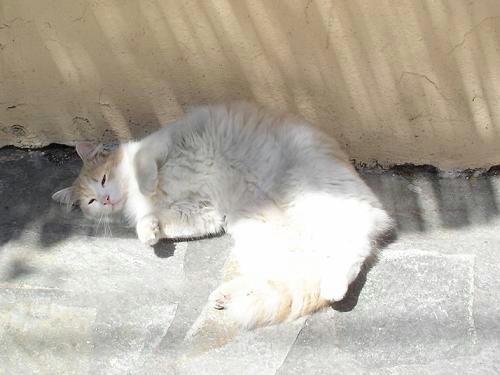 2007cats8v058