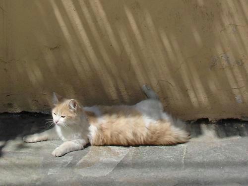 2007cats8v060