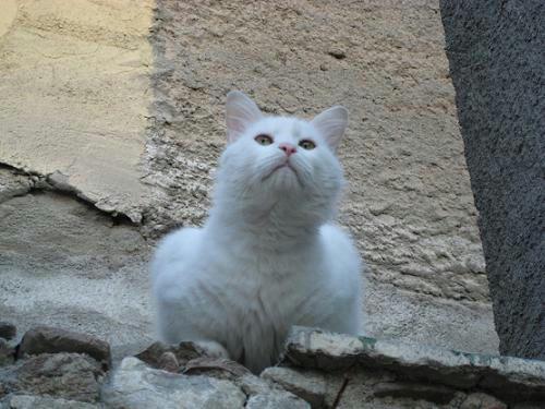 ☆The Greek Cats☆Οι Ελληνόγατες☆ギリシャの猫☆ 写真無断転用転載禁止agapi.blog.shinobi.jp