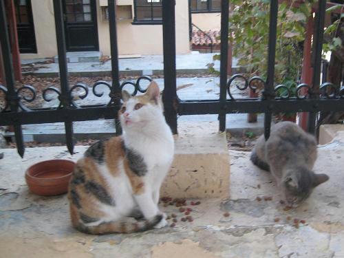 三毛仔猫マイラ