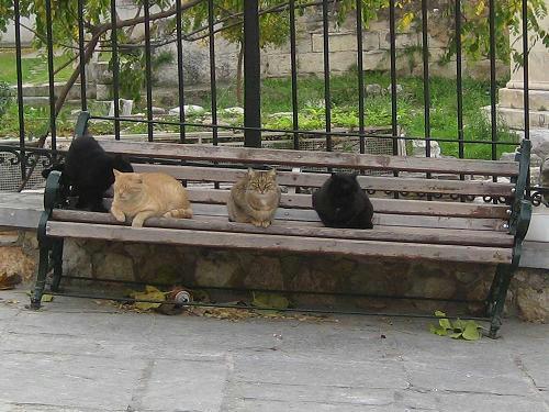 ☆The Greek Cats☆Οι Ελληνόγατες☆ギリシャの猫☆agapi.blog.shinobi.jp写真無断転用掲載禁止