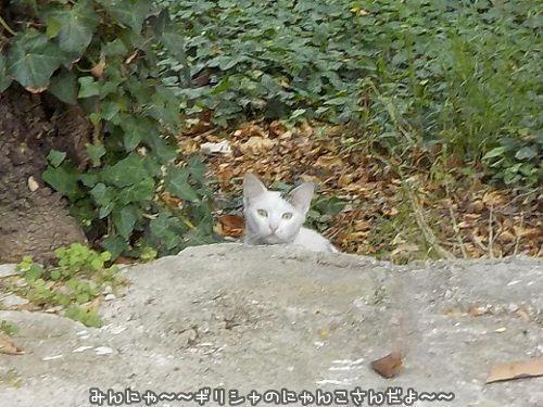 ギリシャの猫☆The Greek Cats☆Οι...