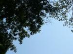 木のある空