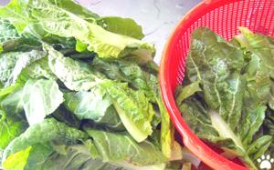 今日のMy弁当「自家製高菜炒めでチャーハン」