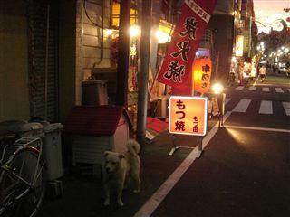 もつ田前の犬