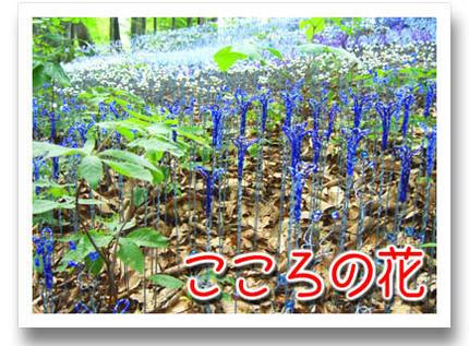 2009_09070019.jpg