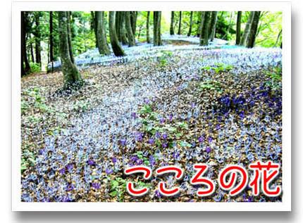 2009_09070021.jpg
