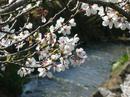 hanamiyama.025_001.JPG