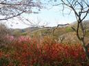 hanamiyama.032_001.JPG