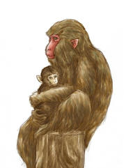 (猿の親子)