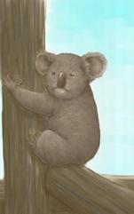 It is assumed koala bear