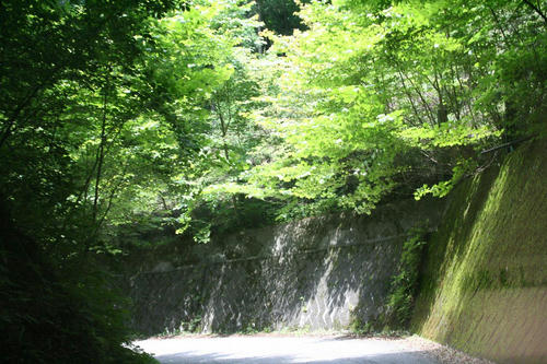 20080721_Kiri_08.jpg