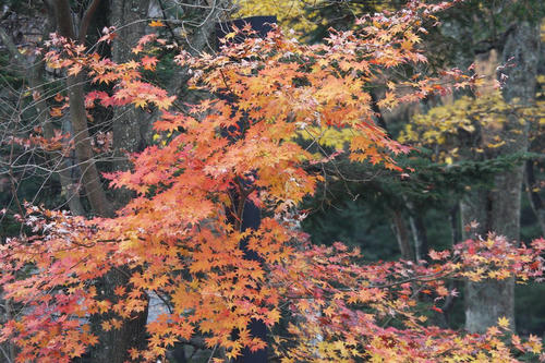20081115_Kzawa_027.jpg