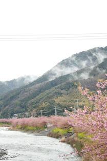kawazu7.jpg