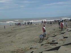 7.15_beachclean.jpg