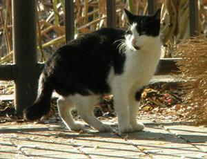 上野不忍池にいた鳴き声がとても可愛いネコ♪