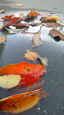 落ち葉 in 水たまり