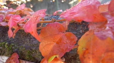 赤と黄色の葉っぱ