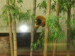 パンダの座は奪ってやったぜ!!