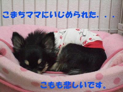2008_03140002.JPG