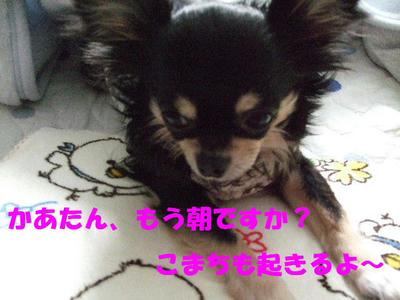 2008_03170007.JPG