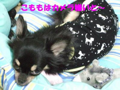 2008_03200008.JPG