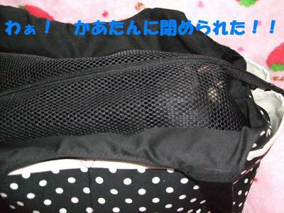2008_03240010.JPG