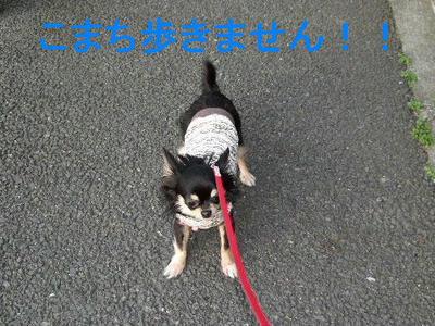 2008_04030022.JPG