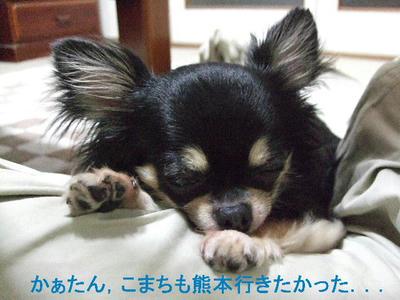 2008_06080031.JPG