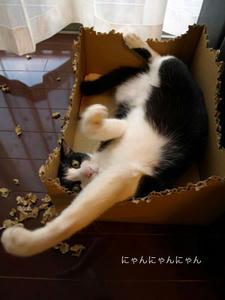 くろまめ猫パンチ