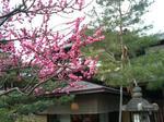 20100313_京都旅