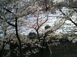 2010年_桜_大阪