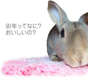 th_chu101215.jpg