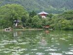 夏の大沢池