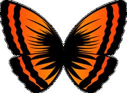 オレンジ蝶