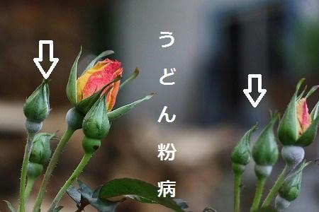 IMG_5339.jpg