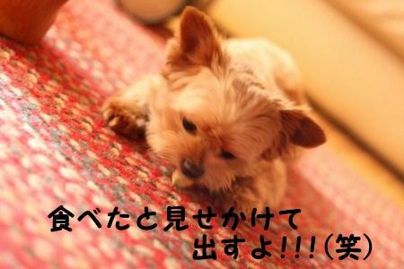 IMG_6661.jpg