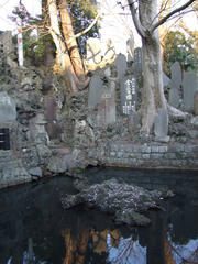 仁王門の先の右側にある泉…岩は亀の形?